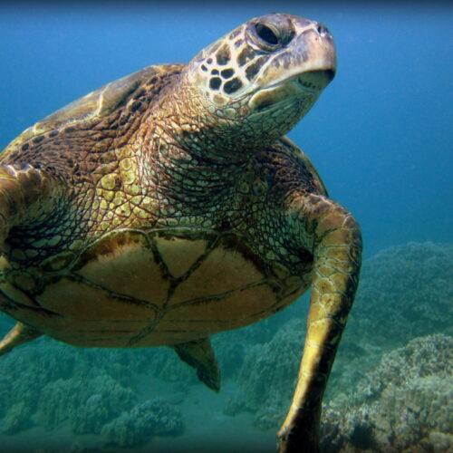 Turtle3 Sept19